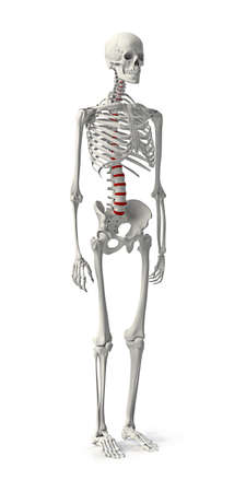 position: 3D Skeleton