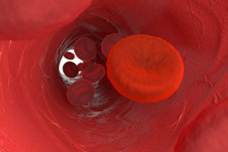 vasos sanguineos: Vista microscópica de sangre con un celular cerca