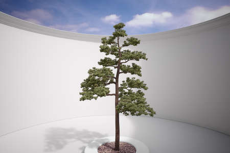 Tree in construction with gravel and sunlight photo