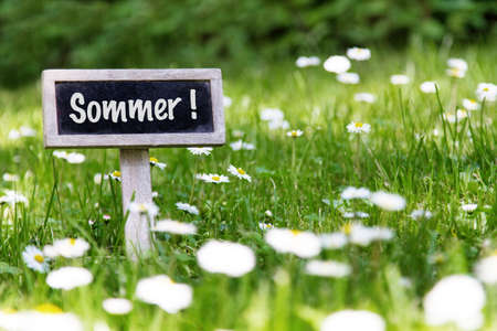 sommer: Sommer signboard in the meadow and flowers Stock Photo
