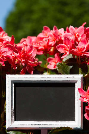 Blank sign in a flower pott with copy space photo