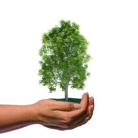 Hand holding a tree with green grass Stock Photo