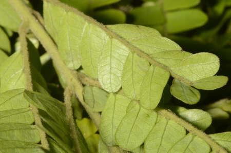 Green leaves textures in macro Imagens