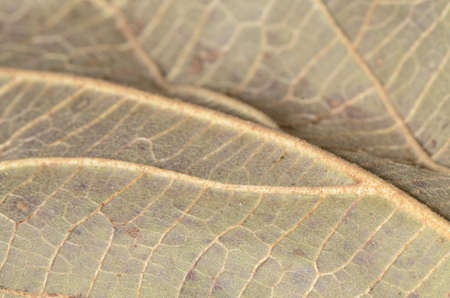 Macro of a texture of a dry leaf