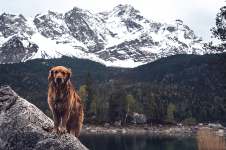 Dog in front of the Zugspitze at the Eibsee