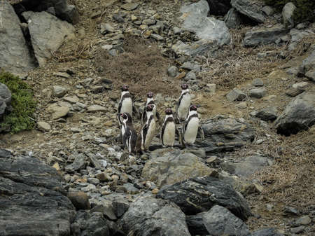 Chile wild penguin patagonia nature