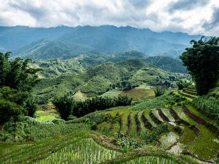 Vietnam Sapa Rice fields beautiful view 스톡 콘텐츠