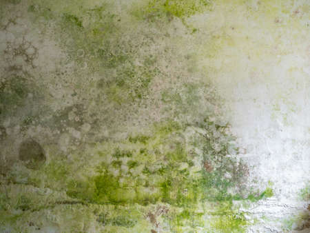 Green mould on a white wall background texture template
