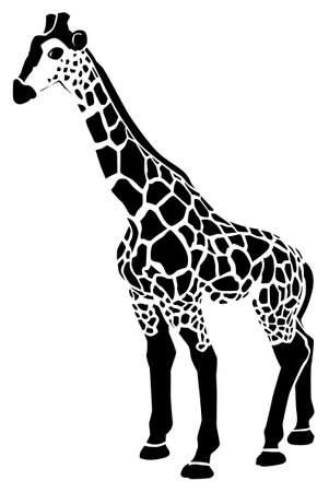 Black pattern of a giraffe on a white background