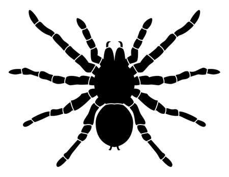 Black pattern of a spider on a white background