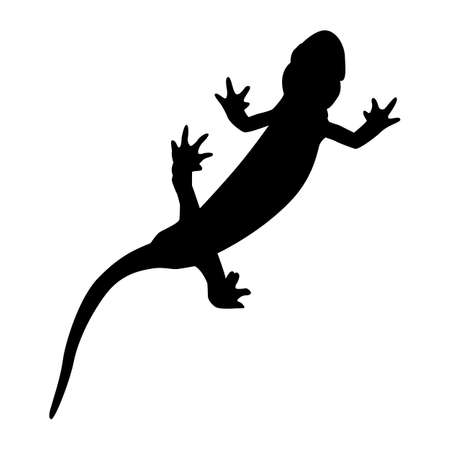 Black pattern of a salamander on a white background