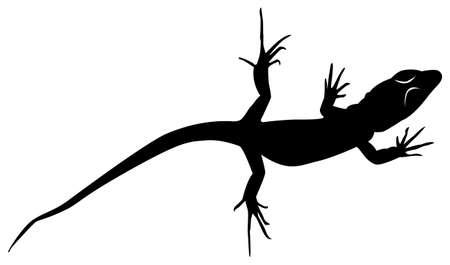Black pattern of a lizard on a white background Ilustração
