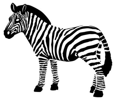 Black pattern of a zebra on a white background Ilustração