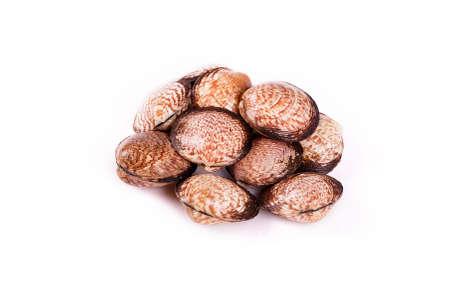 amanda: clams amanda Stock Photo