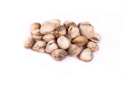 clam cuore 写真素材