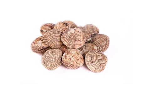 Tartufo clam Stockfoto