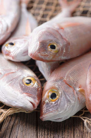 silver perch: Pile of fish fish market Stock Photo
