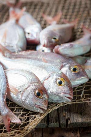 Pile von Fisch Fischmarkt