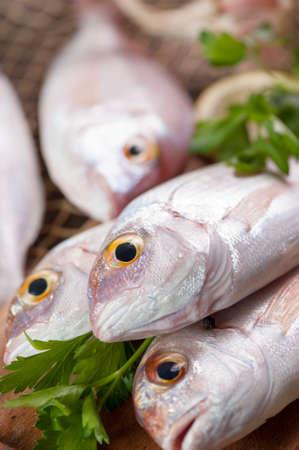 gilthead: Fresh Fish