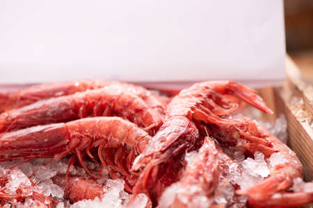 Red prawns from mediterranean sea