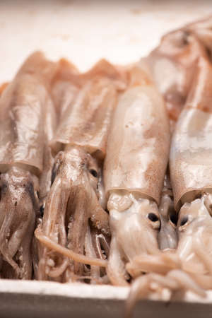 Fresh squid  for sale on the market Stock Photo