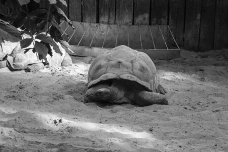 Black and white shot of a turtle