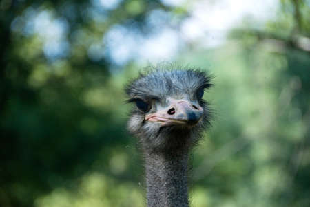 curiousness: ostrich portrait