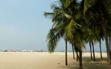 sandal tree: Palm trees in Copacabana with strip of sand and horizon.