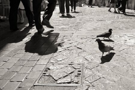 pidgeon: Pidgeon on cobblestone pavement in Rome while people is walking in background, black and white life in Rome Stock Photo