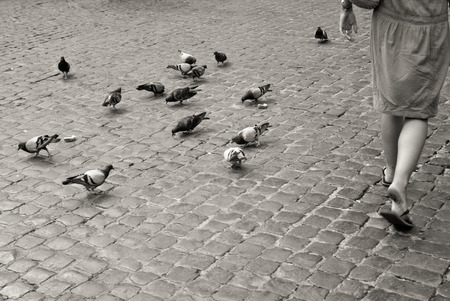 pidgeon: Many pidgeons eating on cobblestone pavement in Rome while one woman is walking, black and white life in Rome