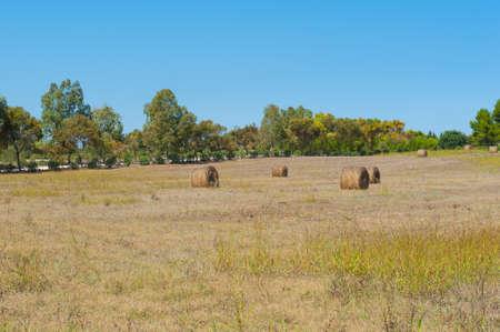 hayrick: Hayricks in a farm landscape, autumn colors and blue sky Stock Photo