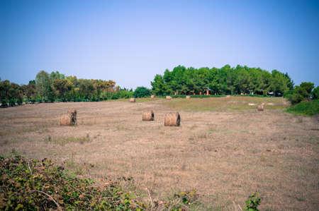 hayrick: Hayricks in a farm landscape, vintage colors and blue sky Stock Photo