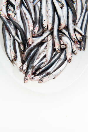 engraulis: White plate full of many fresh raw anchovy on white background