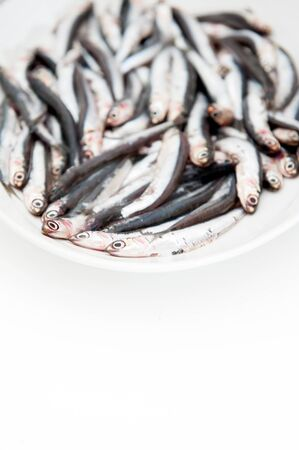 engraulis encrasicolus: White plate full of many fresh raw anchovy on white background, selective focus