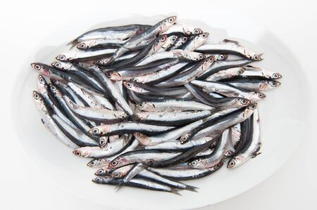 european anchovy: White plate full of many fresh raw anchovy on white background
