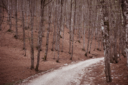 fascinating: Autumn colors beech tree forest with fascinating path Stock Photo