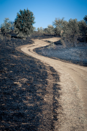 scorched: Path between burned blackened fields, concept of making scorched earth