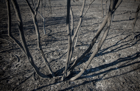 scorched: Burned shrubs and scorched earth after fire blaze detail
