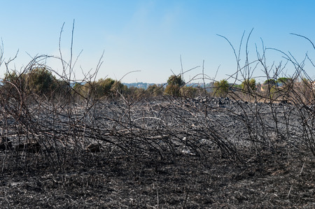 scorched: Landscape view of a burned field and scorched earth after fire blaze, cityscape in background