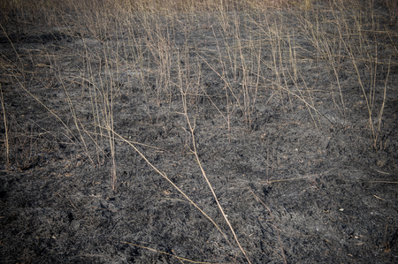 scorched: Burned field and scorched earth after fire blaze detail Stock Photo