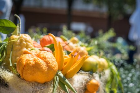 Heap of different citrus fruits in basket closeup with citron, orange, bergamot and buddhas hand