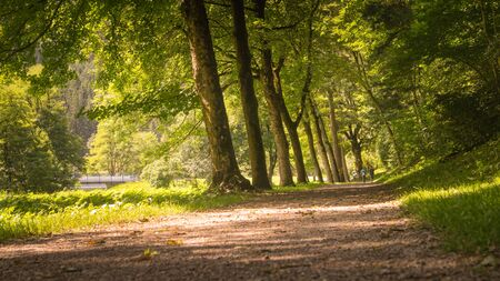 Tree lined avenue in summer