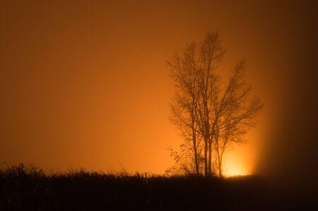 Tree in a foggy night Reklamní fotografie