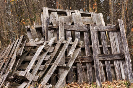 mustiness: old broken pallets abandoned in the woods