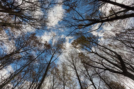 treetops: the treetops of the forest turn to the sky