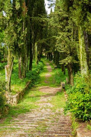 p�rim�tre: rue �troite bord�e d'arbres qui borde le p�rim�tre d'une petite ville
