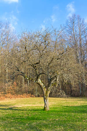 tends: old and lonely tree, which tends its branches toward the blue sky