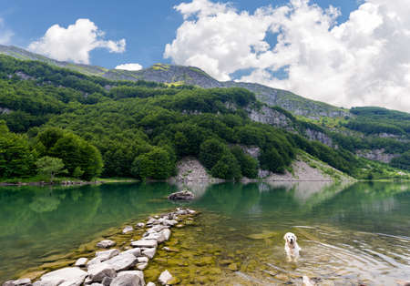 refreshed: big white dog is refreshed in the lake Stock Photo