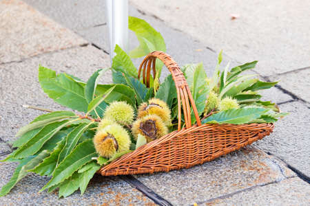 chestnuts inside a basket full of green leaves
