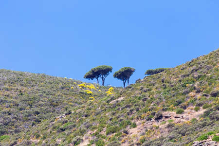 group of solitary trees on the hill